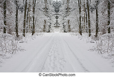 Winter Landscape Background in the Forest and Snow