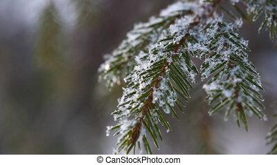 Snowflakes. Macro.
