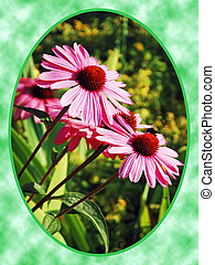 Purple echinacea flowers on green background