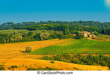 Chianti Region - Hill Of Tuscany With Vineyard In The...