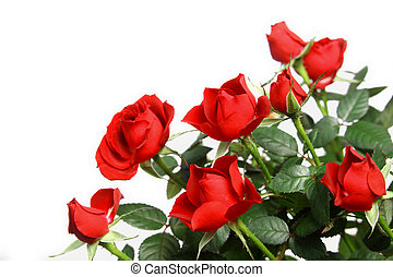 Miniature red roses