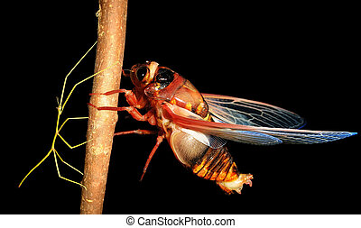 insect cicada and walking stick bug