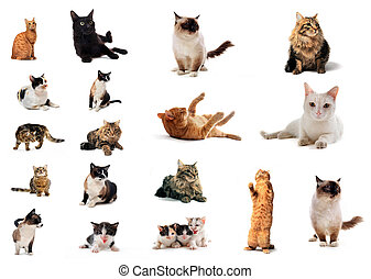 group of cats - group of cat in front of a white background