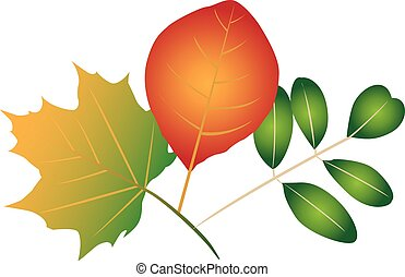 Colorful leaves - Illustration of different colorful leaves,...