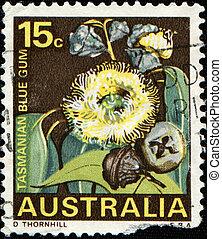flower Tasmanian blue gum - AUSTRALIA - CIRCA 1968: An...