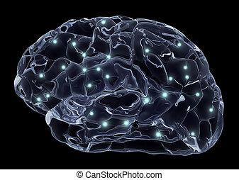 human, cérebro, neurônios