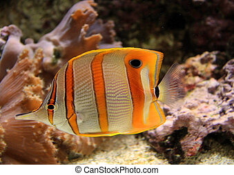 Colorful saltwater tank - Beautiful tropical fish in a...