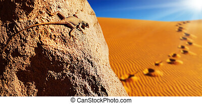 Sahara Desert - Desert lizard on the rock against sand dune...