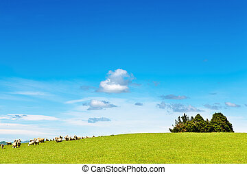 Green field and blue sky - Landscape with green field and...