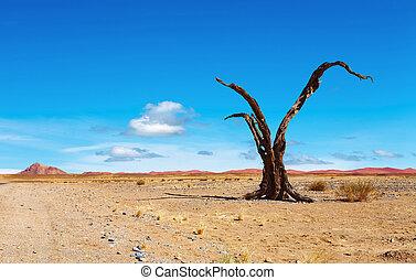Namib Desert - Dead tree in Namib Desert, Namibia
