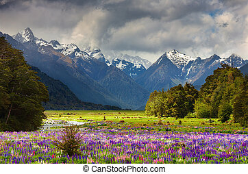 Beautiful valley - Mountain landscape with blossoming field,...