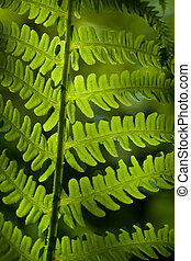 Green leaf on sunlight in anture close up