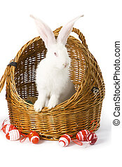 White albino rabbit in basket - Big-eared, red-eyed white...