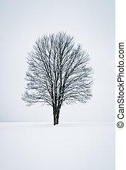 Solitude Winter Landscape