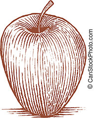 Woodcut Apple - Woodcut style illustration of an apple