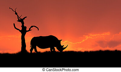 african rhinoceros silhouette - silhouette of african white...