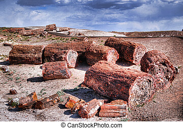 Petrified Trees - Petrified trees in the petrified forest...
