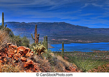 Roosevelt Lake in central Arizona with saguaro cacti