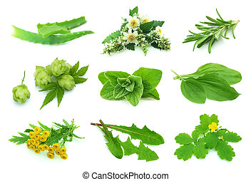 Collage various  herbs