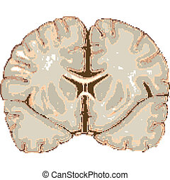 human brain isolated on white background, abstract vector...