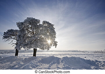 tree in winter with snow covered fields