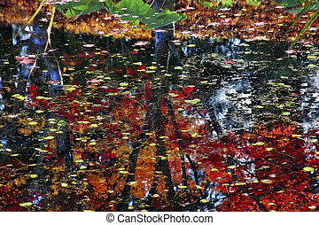 Lily Pads Fall Colors Water Tree Reflections Yellow, Green...
