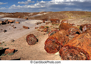 Petrified Trees - Scenic landscape of ancient petrified...