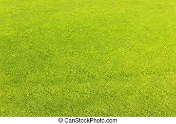 Green golf field grass background