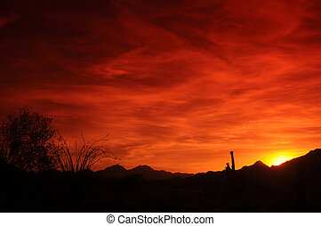 Arizona Sunset - Red Arizona sunset with saguaro and...