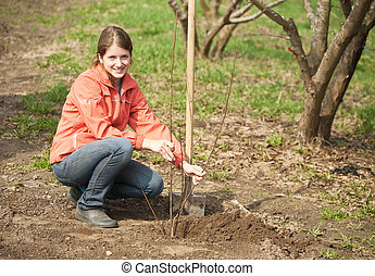 woman resetting tree sprouts - young woman resetting tree...
