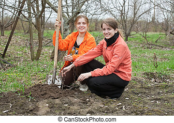 women working with shovel in orchard - Two young women...