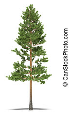Pine nine metres on a white background. It's 3D image.