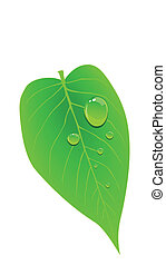 Dew on a leaf - Stock vector of dew on a leaf