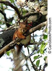 Valentine's squirrel - Valentine's Day squirrel