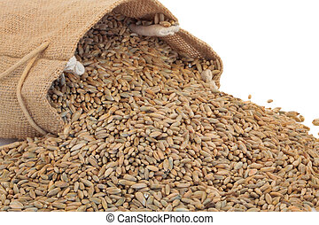 Rye Grain - Rye grain spilling out of a hessian sack over...