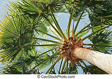 Green palm tree on sky background