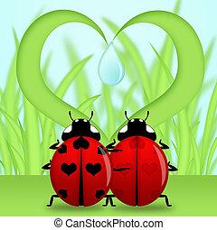 corazón, mariquita, pareja, forma, debajo, pasto o césped