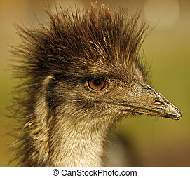 Emu - Shot at an Emu ranch using a Canon EOS 7D body and...