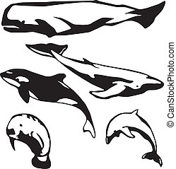 Marine mammals - 5 stylized vector illustrations of marine...