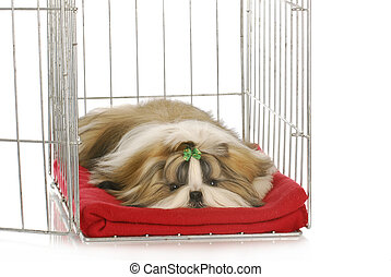 dog in a crate - shih tzu puppy laying in dog crate on red...