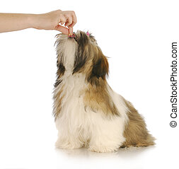 feeding a dog - hand reaching out to give a treat to shih...