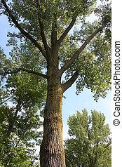 Northern Illinois Nature