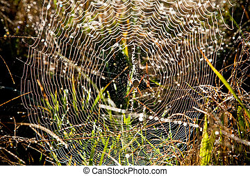 Perfect Spiders Web - Spider awaiting its prey on a web