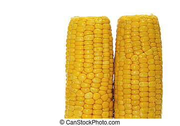 corncobs - closeup of some corncobs isolated on a white...