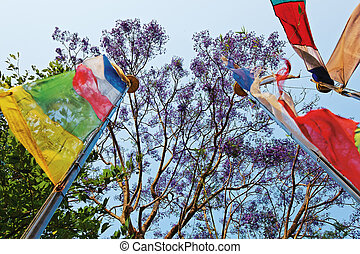 Colored prayerful flags in front of blue sky and tree...