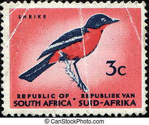 Shrike - SOUTH AFRICA - CIRCA 1971: A stamp printed in South...
