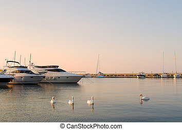 Yachts and white swans in a silent bay