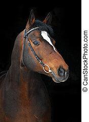 Retrato, de, orgulhoso, baía, cavalo, ligado, a,...