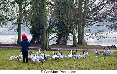 Elderly man with child and geese