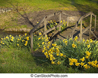 Bridge of Daffodils - A Spring Scene of a wooden bridge and...